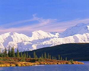 Mount McKinley and Black Spruce trees (Picea mariana) viewed from Wonder Lake, Denali National Park, Alaska  -  Jack Dykinga