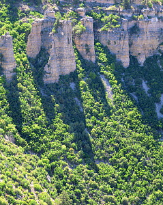 The cliffs at Swamp Point casting shadows accross vegetation in Grand Canyon National Park, Arizona  -  Jack Dykinga
