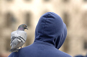 Man with a feral pigeon (Columba livia) on his shoulder. Trafalgar Square, London, UK - Laurent Geslin