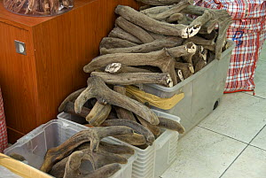 Deer horns for sale in Chinese herbal medicine shop, Hong Kong, China - Adrian Davies