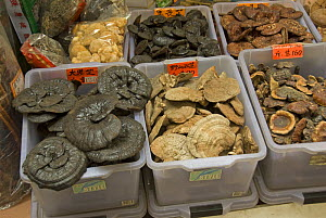 Various fungi for sale in Chinese herbal medicine market, Hong Kong, China - Adrian Davies