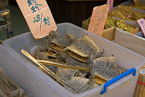 Dried Lizards in Chinese herbal medicine shop, Hong Kong, China - Adrian Davies