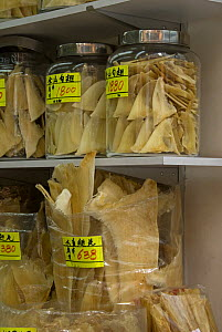 Shark fin for sale in Chinese herbal medicine market, Hong Kong, China - Adrian Davies