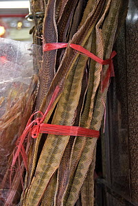 Dried snake skins for sale in Herbal Medicine Market, Hong Kong, China - Adrian Davies