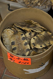 Turtle shells for sale in Chinese Herbal Medicine market, Hong Kong, China - Adrian Davies