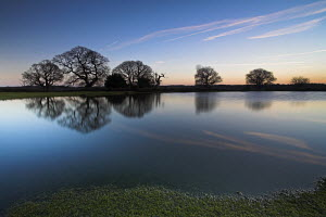 Silhouetted oak trees reflect in pond, New Forest National Park, Hampshire, England - Adam Burton