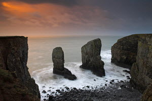 Rock stacks guard the entrance to a secluded Pembrokeshire cove, Wales  -  Adam Burton