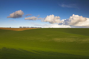 A row of trees besides rolling arable fields, Cheesefoot Head, Hampshire, England - Adam Burton