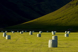 Hay bales wrapped up in fields near Vik, South Iceland  -  Inaki Relanzon