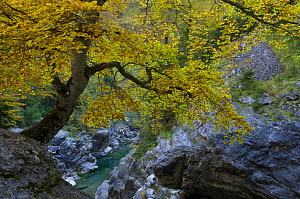 Autumm in A�isclo Valley, Ordesa Monte Perdido National Park, Pyrenees, Aragon, Spain  -  Inaki Relanzon