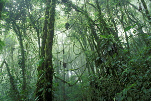 Cloud forest with low cloud cover, Santa Elena Nature Reserve, Costa Rica  -  Jouan & Rius