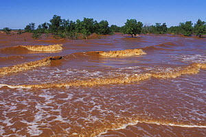 Mangoves in sea, coloured red by laterite, Madagascar - Jouan & Rius