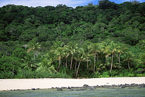 Coastal landscape with beach,Coconut Palms and forest, Yaduataba Island, Fiji. A small uninhabited island that is the last stronghold for the endangered Fiji Crested Iguana (Brachylophus vitiensis). - Tim Laman