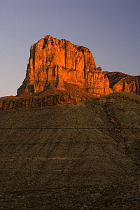 El Capitan at sunset, Guadalupe Mountains National Park, Texas, USA  -  Ingo Arndt
