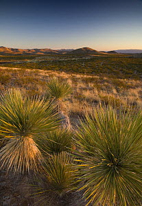 Guadalupe Mountains National Park at sunset, Texas, USA  -  Ingo Arndt