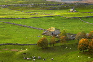 View over farm buildings and stone walls at Arncliffe, Littondale, Yorkshire Dales National Park, England, UK, autumn - David Noton