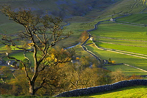 Autumn colours at Arncliffe, Littondale, Yorkshire Dales National Park, England, UK - David Noton
