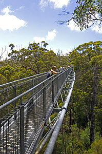 The Valley of the Giants Tree Top Walkway over the canopy of a tingle forest, between Walpole and Denmark, Western Australia - Steven David Miller
