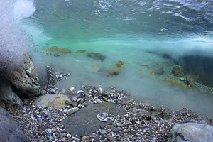 Underwater landscape in Hongrin River with ice on the river bed and surface in winter. Fribourg, Gruy�re, Switzerland, December - Michel Roggo
