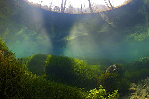 Underwater landscape in Spring creek, Saane river tributary, in winter, Gruy�re, Fribourg, Switzerland. February - Michel Roggo