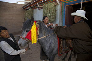 People preparing horse for ride to holy mountain, Dargye, Sichuan, Tibet, China - Dr. Axel Gebauer