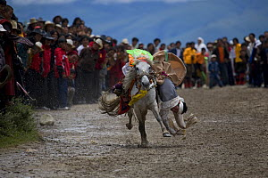 Man falling off horse, festival at Holy hill near Dargye, Sichuan Province, China, Tibet. Part of the Biodiversity hotspot �Southeast China mountains� - Dr. Axel Gebauer