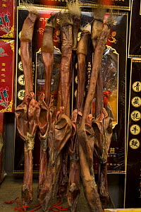 Dried beef testicles and penises, used in traditional Chinese medicine, Ximen market, Xining, Qinghai Province, Tibet, China  -  Dr. Axel Gebauer