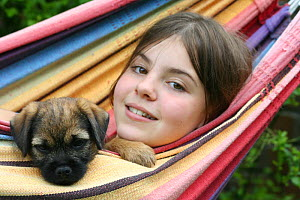 Border terrier (Canis familiaris) puppy with a girl in a hammock. Model released  -  Miles Barton