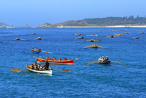 Gigs rowing out to start line off Tresco for heat of World Pilot Gig Championships. Isles of Scilly, May 2008  -  Adam White