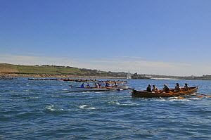 Men's crews racing in the top heat at the 19th World Pilot Gig Championships, Isles of Scilly, May 2008 - Adam White