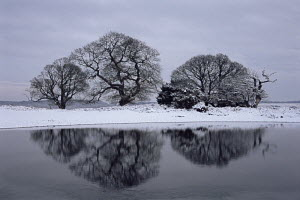 Trees reflected in the icy lake in winter, New Forest, Hampshire  -  Adam Burton