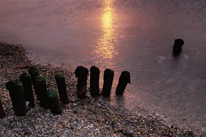 First light of sunrise reflected in calm waters beside old coastal defences at Lepe Beach, Hampshire, UK  -  Adam Burton
