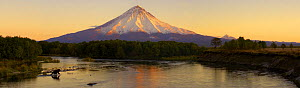 Panoramic view of Kronotsky River and Kronotsky Volcano with Kamchatka brown bear (Ursus arctos beringianus)  fishing in the river, Kronotsky Zapovednik, Kamchatka, Far East Russia  -  Igor Shpilenok