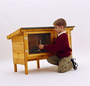 Boy fixing a clean water bottle to wire mesh of rabbit hutch - Jane Burton