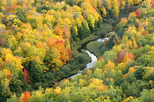 Aerial view of Little Carp River and early autumn woodland, Porcupine Mountains State Park, Upper Peninsula, Michigan, USA - Thomas Lazar