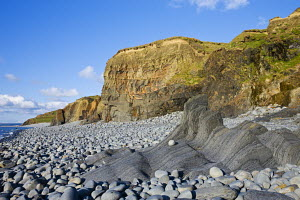Coast, cliffs and pepple beach at Abbotsham, North Devon, UK, showing rock striations and coastal geology.  -  Adam Burton