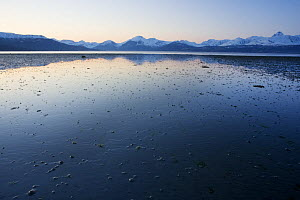 Tidal flats in Northern Norway, like this one in Balsfjord in Troms, are an extremely valuable habitat for migrating waders in spring. May - Roy Mangersnes