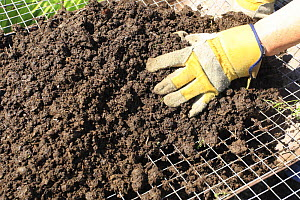Sieving compost through one inch mesh to remove large lumps, UK, model released - Dave Bevan