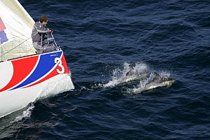 """""""Bostik"""" Figaro yacht with dolphins at bow, March 2005  -  Benoit Stichelbaut"""