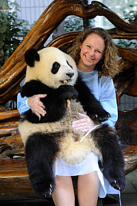Tourist being photographed with young giant panda aged one year at the Chengdu Research Base of Giant Panda Breeding - Eric Baccega