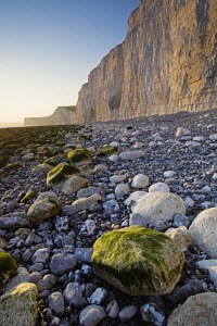Late evening sunlight on white cliffs at Birling Gap, East Sussex, England  -  Adam Burton