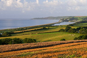 View of Slapton Ley National Nature Reserve, and Start Bay, Devon, England. Note lighthouse at Start Point. - Adrian Davies