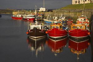 Boat reflections in harbour, Northumberland  -  Peter Lewis
