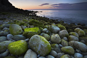 Algae covered rocks at Church Ope Cove, Portland, Dorset, England. Jurassic Coast World Heritage Site.  -  Adam Burton