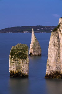 The Pinnacles chalk stacks, in the sea beside Ballard Down, with Swanage in the background. Dorset, England. Jurassic Coast World Heritage Site.  -  Adam Burton