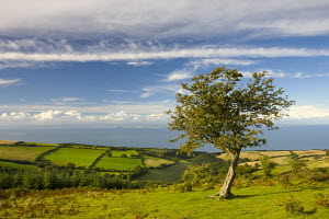 Porlock Common and countryside in summertime, Exmoor National Park, Somerset, England  -  Adam Burton