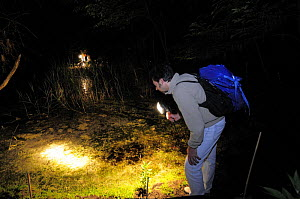 Research scientist searching for Spadefoot toads {Pelobates fuscus} at night by torch light, Porto Caleri botanic garden, Parco Delta del Po, NE Italy  2008 - Fabio Liverani