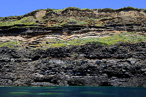 Striations in coastal cliff, Ventotene, Pontine Islands, Italy  2008  -  Fabio Liverani