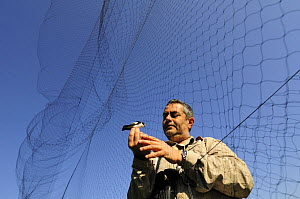 Research scientist checks bird net at field research station for the study of bird migration, Ventotene, Pontine Islands, Italy~ 2008  -  Fabio Liverani