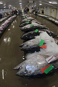 Labeled fish amongst ice at an early morning fish auction on Oahu's, Hawaii. September 2007.  -  David Fleetham